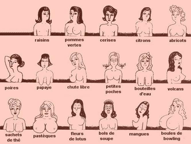forme des seins des femmes3