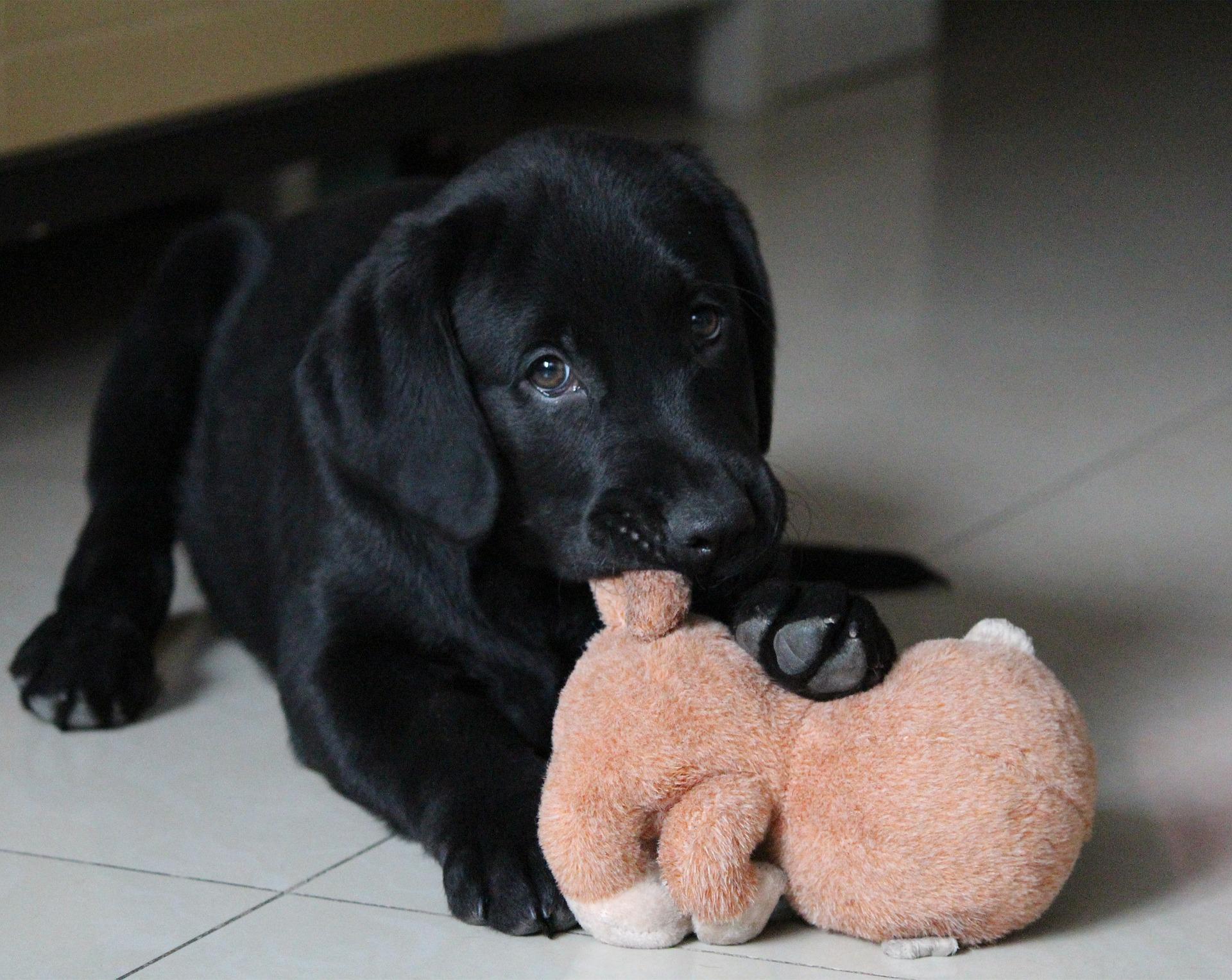 chien Lydia89 / Pixabay